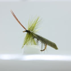 Olive Silverhorn Caddis Dry Fly by the dozen