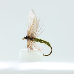 Green wells Glory Dry Fly by the dozen